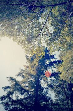 pine and a sunspot  by mrs. french, via Flickr