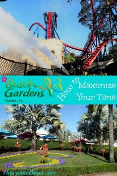 With so much to do and see at Busch Gardens in Tampa Bay, Florida, it's difficult to know how to effectively manage your time in order to get the most out of it.  This theme park doesn't just have thrilling rides, it also has entertaining shows to watch, exotic animals to observe, and beautiful landscape displays to admire. #Tampa #BuschGardens #Florida #Travel