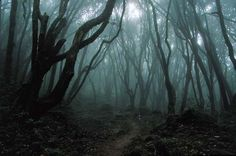 Aokigahara Forest, Japan (also known as the sea of trees and Suicide Forest)  is renowned as one of the favorite places for people who want to commit suicide.