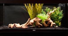 How to set up an aquarium with plastic plants