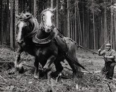 Martin Martinček: Na Čiernom Váhu - 1975 A Wrinkle In Time, Eastern Europe, Historical Photos, Old World, Countryside, Nostalgia, Horses, In This Moment, Black And White