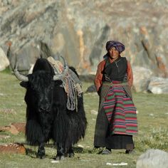 """""""During the summer months there are nomadic families along the way, sometimes on the move, travelling with large herds of animals and their homes on the back of camels and yaks."""" Mongolia: the Bradt Guide; www.bradtguides.com"""