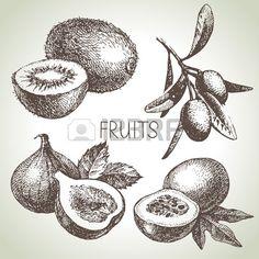 Ręcznie rysowane szkic owoców zestaw. Eco żywności. Ilustracji wektorowych…