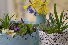 Spring blooms in pastel coloured containers.  Perfect for Easter