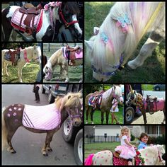 Our sweet adorable ponies all dolled up for their pony parties!