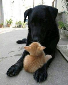 Cute Overload: Internet`s best cute dogs and cute cats are here. Aww pics and adorable animals. Animals And Pets, Baby Animals, Funny Animals, Cute Animals, Cute Puppies, Dogs And Puppies, Doggies, Pet Dogs, Pet Pet