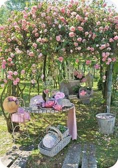 Please transplant these roses to my garden?!!!