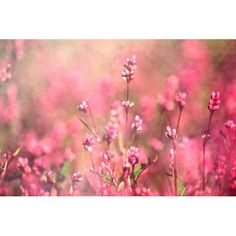 """Found it at Wayfair - """"It's a Sweet Sweet Life"""" by Robert Dickinson Photographic Print on Wrapped Canvas"""