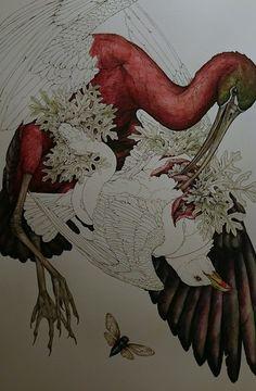 Lauren Marx, Decomposing Animals