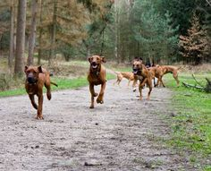 The Top 6 Dog Breeds to Bring on Your Adventures : Discovery News To find the right dog for your adventures, it helps to know a little about dog personalities generally.