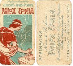 Atkinson's Phlox Eonia