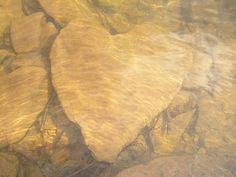 Romantic Naturetography: Hidden Hearts Prove That Love is Everywhere If You Look