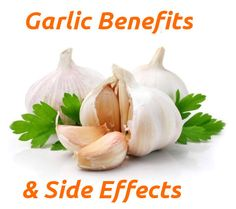 Almost everyone knows about the following garlic health benefits which are, strengthening immunity and fighting a cold, although other useful features of garlic are less known. When it comes to garlic side effects it is usually only mentioned that it causes bad breath. However, garlic has other negative features that can cause serious harm to health.