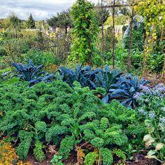 Gemüse-Garten im Herbst in Bingenheim.