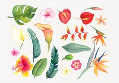 Watercolor clipart tropical flowers. Watercolor tropic. | Etsy