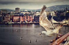 Gull - Oslo, Norway.