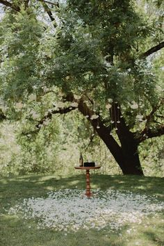 Intimate Backyard Wedding in Northern California