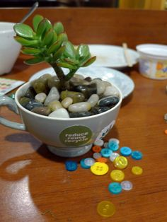 Succulent and stones in teacup