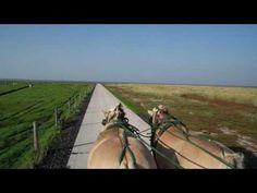 Traumland Film präsentiert:: mit Pferd und Wagen zur Hallig Südfall (Bilder ein...