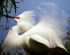 Unique, Interesting birds