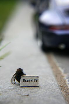 Poopville  - Tiny Things, Flies and Creativity - Photos by Ukaaa