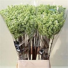 <p> 	LILACS MADAME FLORENT STEPMAN - 2 HDS is a beautiful White cut flower. It is approx. 50cm and wholesaled in Batches of 10 stems.</p>