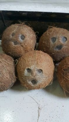 When coconuts give you some catFish look!...