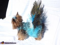 Complete side view of Peacock Costume. Peacock - Homemade costumes for pets