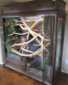 Latest pictures Snake Pet Reptile Enclosure Tips We often get questions about …. – Terrariums- Latest pictures Snake Pet Reptile Enclosure Tips We often get questions about … – Reptile House, Reptile Habitat, Reptile Room, Reptile Cage, Reptile Tanks, Snake Reptile, Vivarium, Paludarium, Les Reptiles