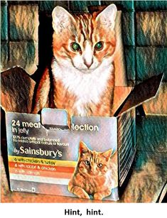 Time for tea! #cats #sainsburys