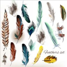 Various dird feathers set vector 05 - https://gooloc.com/various-dird-feathers-set-vector-05/?utm_source=PN&utm_medium=gooloc77%40gmail.com&utm_campaign=SNAP%2Bfrom%2BGooLoc
