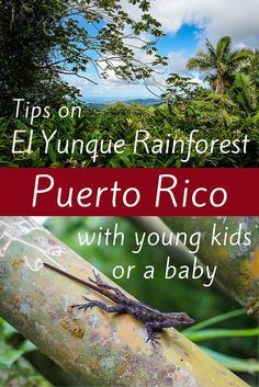 Planning Puerto Rico travel and want to know if it's safe to visit the famous El Yunque Rainforest with young kids or a baby? Here are very useful tips for how to easily visit this beautiful park with all ages of children! Travel With Kids, Family Travel, Travel Around The World, Around The Worlds, El Yunque Rainforest, Puerto Rico Trip, Puerto Rican Culture, Beautiful Park, South America Travel