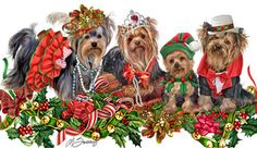 Yorkshire Terrier Christmas Guys & Dolls - by Margaret Sweeney Terrier Breeds, Terrier Dogs, Dog Breeds, Yorkshire Terrier Haircut, Yorkshire Terrier Puppies, Xmas Pictures, Xmas Pics, Yorky, Silky Terrier