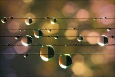 Music of the Rain - Natalia Jeshoa
