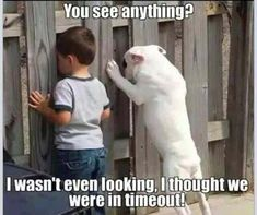 Afternoon Funny Picture Dump 32 Pics #funnydoglaughter