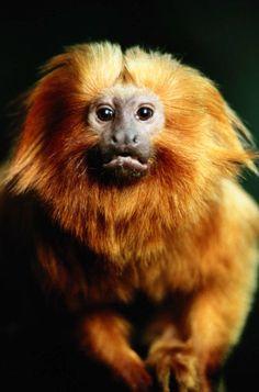"""Quem nunca """"pagou um mico"""" em público? Confira em nosso blog como dizer essa expressão em inglês!"""