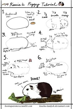 How to draw a guinea pig. This is really cool!