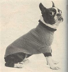 Sweater for Boston from McCall's Needlework, Fall-Winter 1952-53  < Great googly moogly!!  I love this dog's eyes!!!