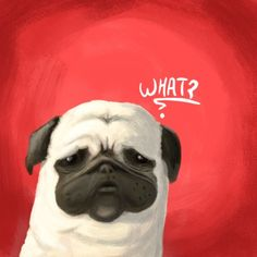 Pug of the day - What ? Art Print