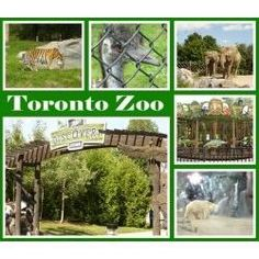 The Toronto Zoo is a place where you can explore nature and spend time with the family. Kids will love visiting the zoo too. This web page will help you plan your trip to the Toronto zoo. Toronto Zoo, Toronto Travel, Trip To Toronto, Ontario Travel, O Canada, Canada Travel, Canada Trip, Niagara Falls Toronto, Ontario Place