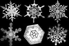 Biography: 19th Century photographer of Snowflakes – Wilson Bentley   MONOVISIONS Snowflake Pictures, Snowflake Bentley, Masaru Emoto, Wordpress, Ice Crystals, Big Muscles, Business Intelligence, Science For Kids, Mad Science
