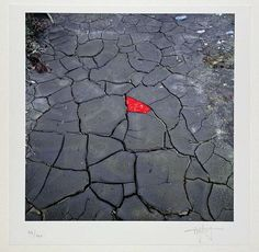 """Andy Goldsworthy """"Red Leaves on Cracked Earth"""""""