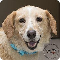 Urgent! I am at a full, high kill shelter in Troy, OH - Labrador Retriever Mix. Meet Princess, a dog for adoption. http://www.adoptapet.com/pet/16262637-troy-ohio-labrador-retriever-mix