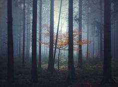 Il sinspire des contes des Frères Grimm pour créer des photographies magiques et envoutantes