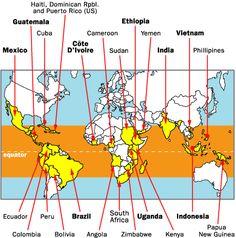"""DE KOFFIEGORDEL - De koffieplant wordt verbouwd in meer dan 70 landen rondom de evenaar. Globaal ligt de grens rond de 25ste Noorderbreedtegraad en rond de 30ste Zuiderbreedtegraad. Daarom wordt dat wel de """"koffiegordel"""" genoemd. Temperatuur, hoogteligging van de plantage, vochtigheidsgraad van de lucht, zon en wind zijn daar gunstig, net zo goed als de gesteldheid van de bodem."""