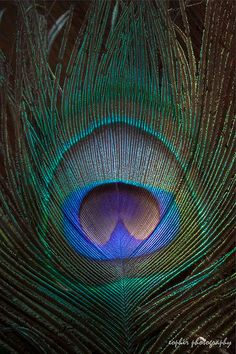 eye of the peacock feather by Kat E Peacock Photos, Peacock Art, Peacock Feathers, Feather Art, Nature Photos, Pretty Pictures, Science Nature, Illustration Art, Art Illustrations