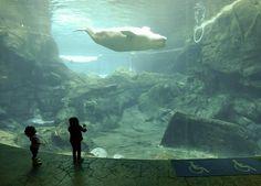 Dos niños observan a una ballena en el Acuario de Georgia, en Atlanta (EU). (EFE/VANGUARDIA LIBERAL)