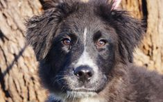 Mano Husky, Dogs, Animals, Animales, Animaux, Animal Memes, Husky Dog, Animal, Pet Dogs