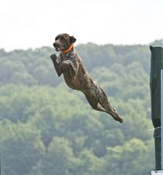 It's a bird, it's a plane...it's a GSP