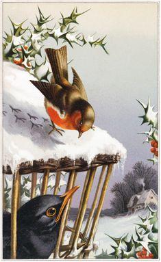 Winter-Birds-Friday-Freebie-GraphicsFairy.jpg (JPEG-kuva, 922×1500 kuvapistettä) - Pienennetty (43 % alkuperäisestä)